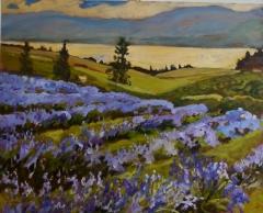 Lavender Farm 24x30 oil