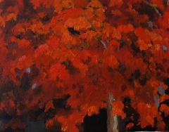 Maple 8x10 on canvas board